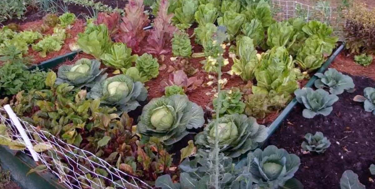 exemple-jardin